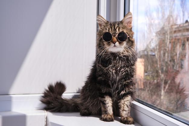 Ritratto di un adorabile, soffice gatto grigio in piccoli occhiali da sole scuri seduto su un davanzale in una giornata calda e soleggiata