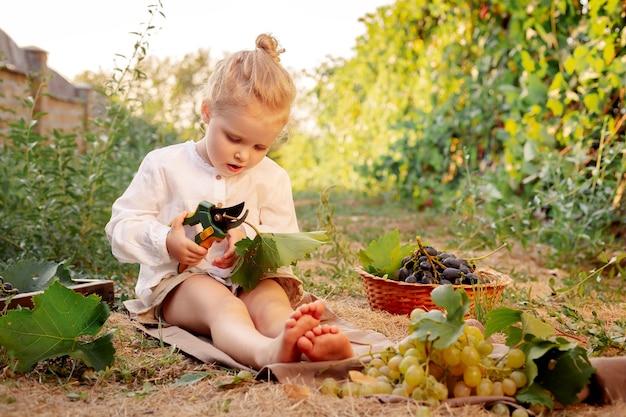 Ritratto di bella ragazza caucasica bambino di 3 anni bionda riccia che tiene le cesoie da potatura in fattoria in vigna.