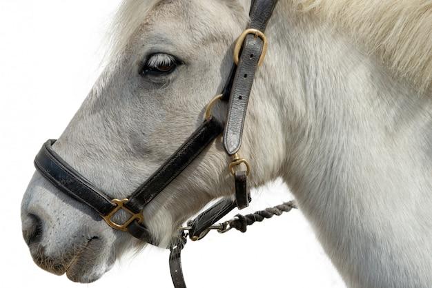 Ritratto di un bellissimo cavallo bianco su bianco