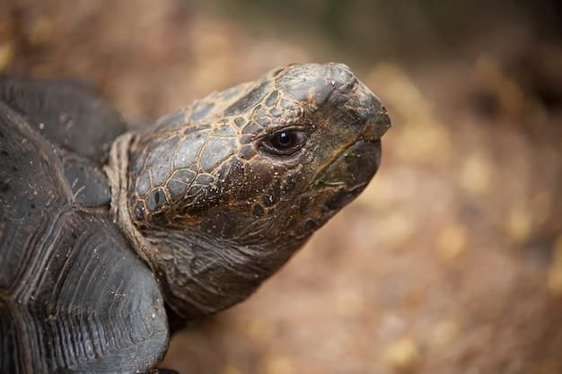 Ritratto alla grande tartaruga in uno zoo della thailandia