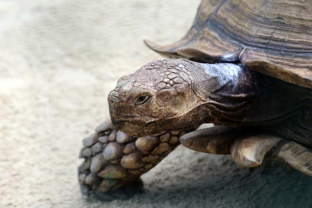 Ritratto di una grande tartaruga