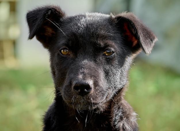 Ritratto di un cucciolo nero