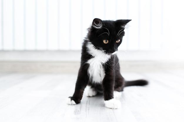 Ritratto di gattino bianco e nero su superficie bianca.