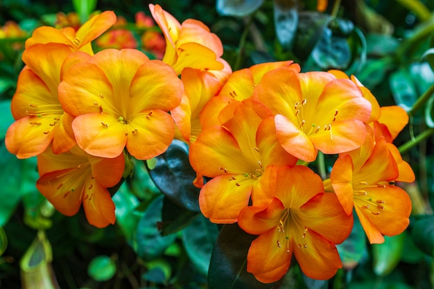 Ritratto di fioritura arancione orchidee.