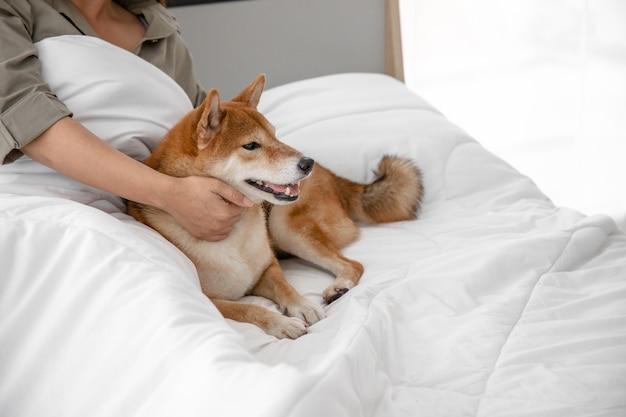 Ritratto di cane carino marrone rilassarsi e divertirsi sul letto in camera da letto con il veterinario. animali domestici come compagnia e alleviare la solitudine.