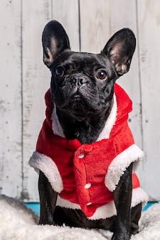 Ritratto di un bulldog in un vestito rosso di babbo natale