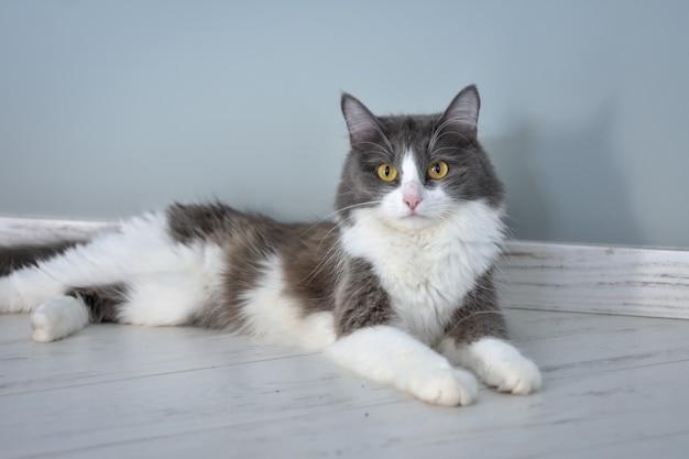 Ritratto di un gatto sdraiato sul pavimento
