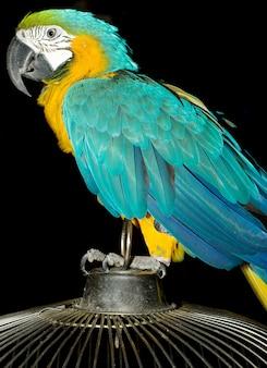 Ritratto di pappagallo colorato seduto sulla gabbia