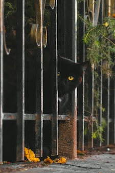 Ritratto di simpatico gatto nero di strada attento che guarda l'obbiettivo da dietro il recinto.
