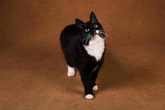 Ritratto di un simpatico gattino nero seduto su sfondo marrone.