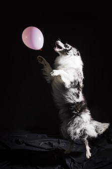 Ritratto di simpatico cane border collie Foto Premium