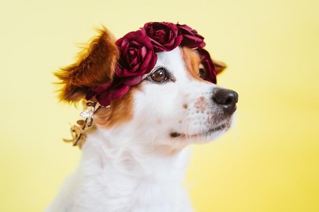 Ritratto del cane sveglio di jack russell che indossa una corona dei fiori sopra fondo giallo