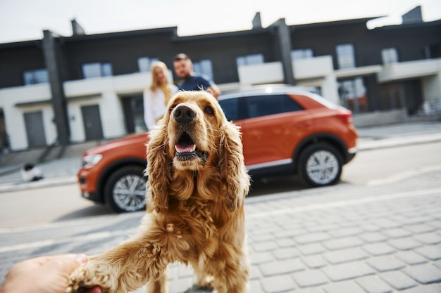 Ritratto di animale domestico carino. una coppia adorabile fa una passeggiata insieme al cane all'aperto vicino alla macchina.