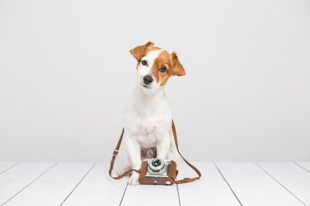 Ritratto di un giovane cane carino piccolo seduto sul pavimento di legno e utilizzando una macchina fotografica vintage marrone