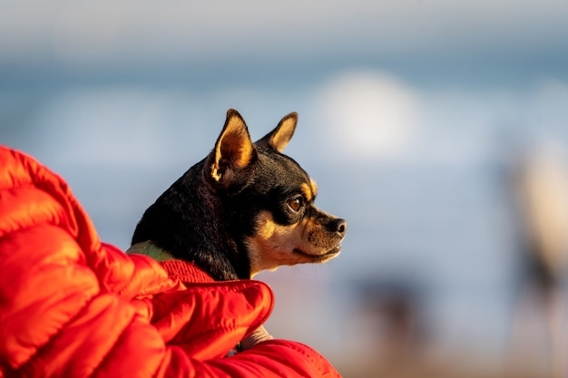 Ritratto di un cane in braccio al padrone