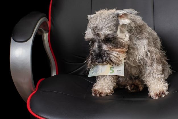 Ritratto di un cane seduto su una sedia da ufficio e con in mano una banconota da cinque euro tra i denti. può essere usato come illustrazione del concetto di business.