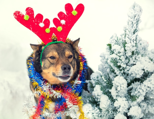 Ritratto di un cane che indossa un corno di cervo con orpelli natalizi vicino a un abete