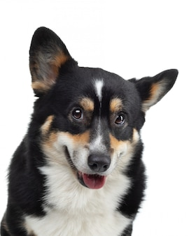 Ritratto di un cane su uno sfondo bianco