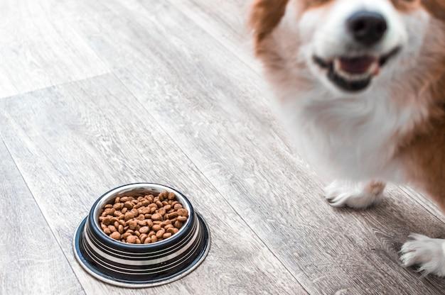 Ritratto di un cane con una ciotola di cibo secco. concetto di cibo per cani