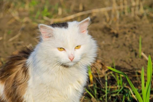 Ritratto di gatto birichino