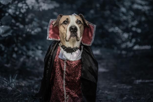 Ritratto di cane divertente vestito per halloween come vampiro dracula nella foresta oscura al chiaro di luna. cucciolo di staffordshire terrier carino serio in costume del vampiro spaventoso nel bosco, girato in chiave di basso
