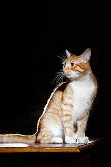 Ritratto di zenzero tabby cat su un tavolo di legno