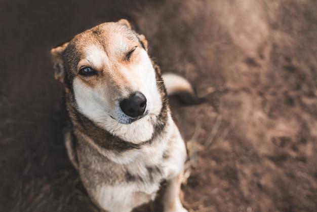 Ritratto di un cane felice che strizza l'occhio e guarda la telecamera