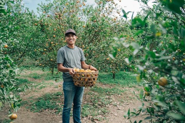 Ritratto di felice agricoltore maschio raccolto frutti arancioni nel campo di arancio
