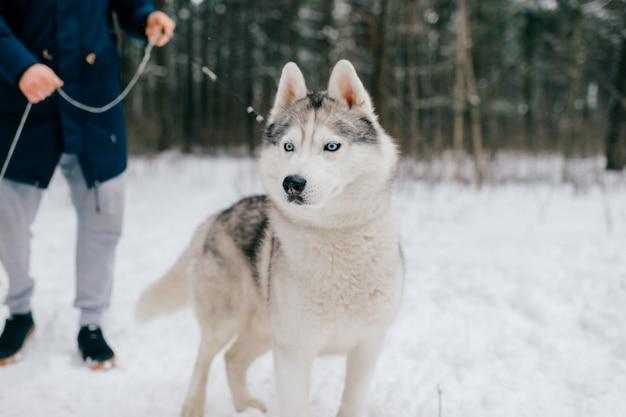 Ritratto di un cane husky nella foresta