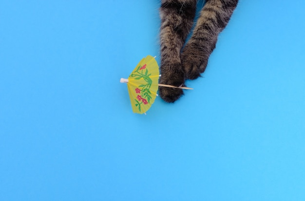 Ritratto di gattino che gioca con l'ombrello shaker su sfondo colorato