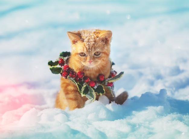 Ritratto di un gattino che indossa una ghirlanda di natale. gatto seduto sulla neve in inverno