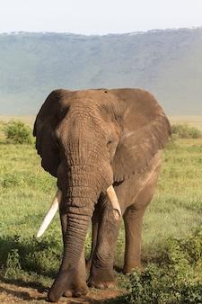Ritratto di grande elefante con una zanna rotta. ngorongoro, tanzania