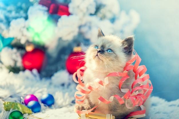 Ritratto di un gattino carino impigliato in una stella filante di natale. gattino seduto vicino a un abete decorato