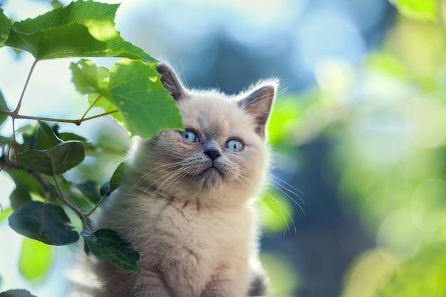 Ritratto di gattino che cammina in giardino