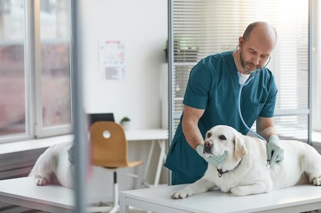 Ritratto di veterinario maturo che ascolta il battito cardiaco del cane durante l'esame presso la clinica veterinaria, copia spazio
