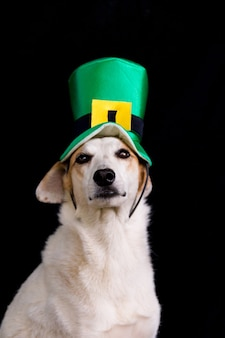 Ritratto di un cane bastardo con il cappello di giorno di san patrizio