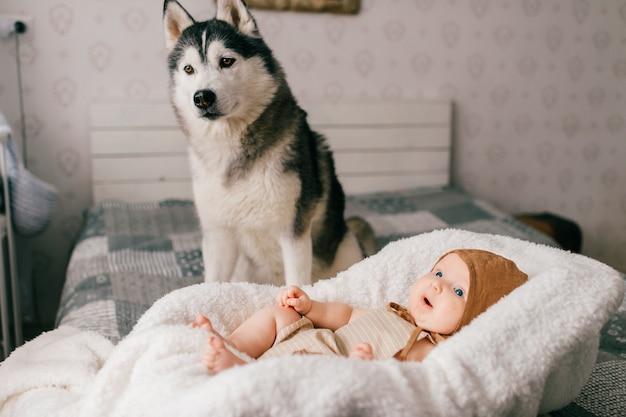 Ritratto di neonato sdraiato nel passeggino sul letto insieme a cucciolo di husky a casa.