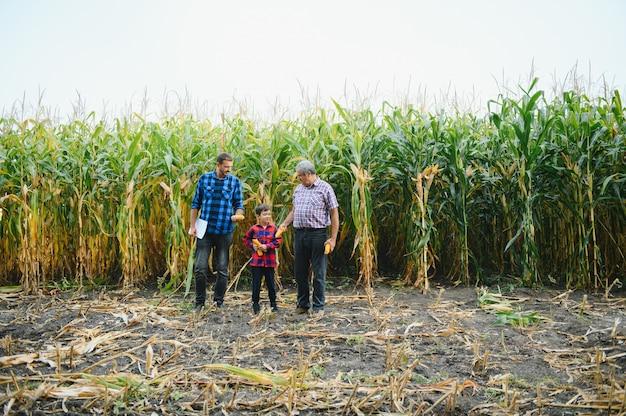 Ritratto del vecchio contadino nel suo campo pieno di raccolti insieme a suo figlio e suo nipote. agricoltura familiare.