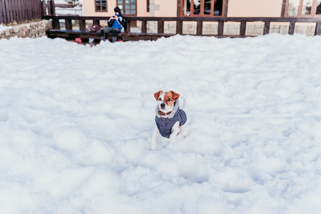 Ritratto all'aperto di un bellissimo cane jack russell sulla neve che indossa un mantello grigio.