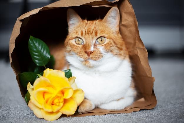 Ritratto del gatto rosso-bianco, che si trova in un sacchetto di carta eco vicino al fiore della rosa gialla