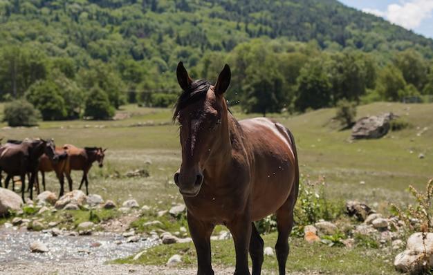 Ritratto di un cavallo malato con mosche sulla natura