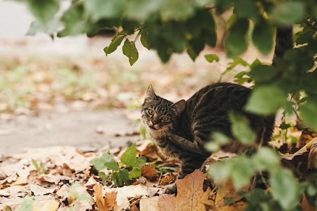 Ritratto di un gatto di strada in natura accanto ai cespugli all'aperto