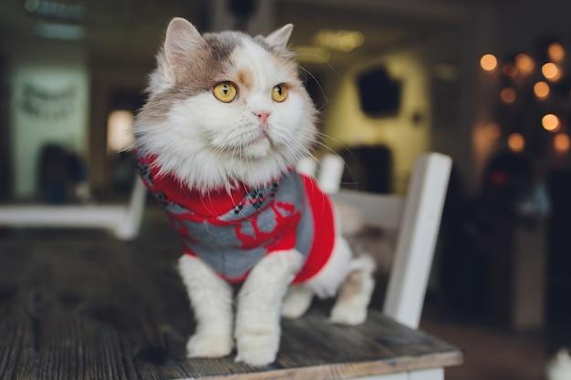Ritratto di un gatto soriano in costume di babbo natale