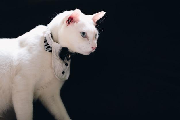 Ritratto di tuxedo white cat che indossa tuta, concetto di moda animale.