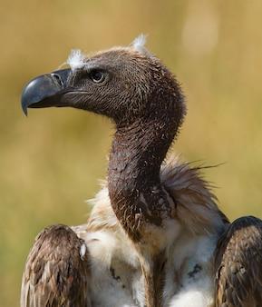 Ritratto di un avvoltoio primo piano kenya tanzania safari africa orientale