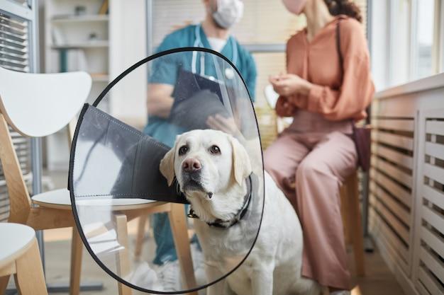 Ritratto di cane labrador bianco che indossa un collare protettivo mentre è seduto nella sala d'attesa della clinica veterinaria, spazio copia