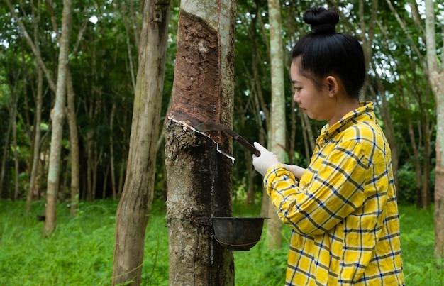Ritratto di donne che toccano il lattice da un albero della gomma dalla thailandia