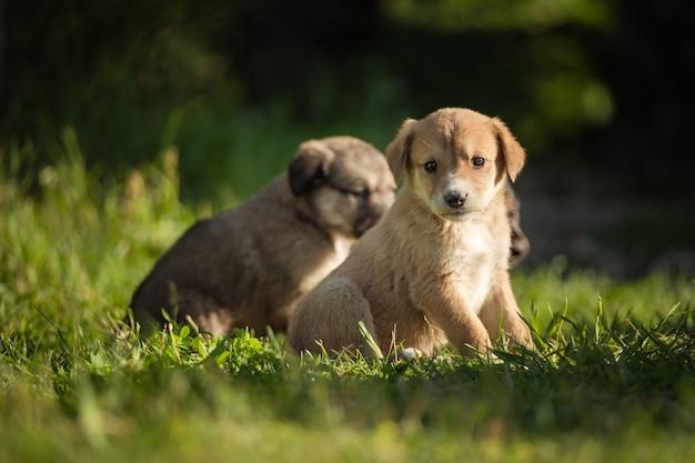Cane giovane del ritratto che gioca nel prato. piccolo cucciolo del cane pastore caucasico