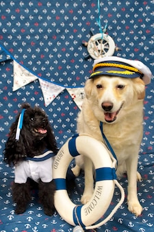 Ritratti di due cani barboncini nani neri e un cane di razza leggera in stile marinaro.