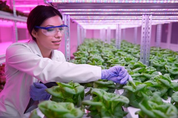 Scienziato agronomo femminile positivo in occhiali protettivi che esamina piante di lattuga verde che crescono in serra idroponica con illuminazione ultravioletta